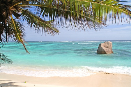 ladigue: Beach with turquoise water and palm trees