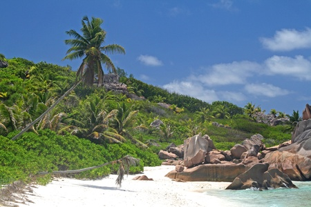 ladigue: Empty beach with coconut palms Stock Photo