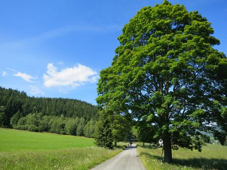 Green nature landscape with road and blue sky photo