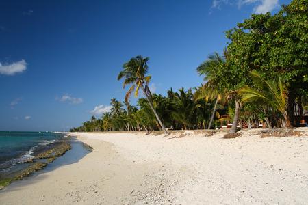 morne: Tropical beach with palm trees, Le Morne, Mauritius