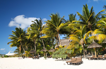 Tropical beach with white sand, palm trees and sun umbrellas, Mauritius