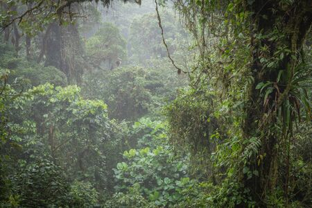 amazonian: A view of the amazonian jungle