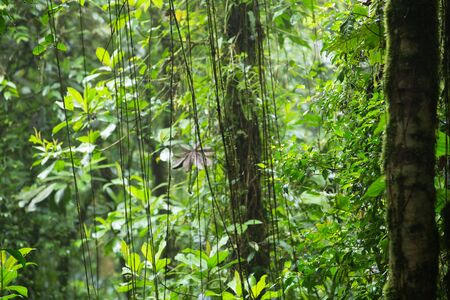 amazonian: A scenic view of the amazonian jungle Stock Photo