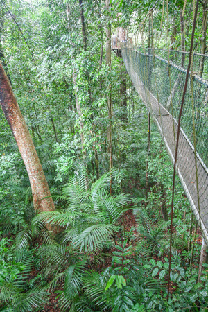 negara: View of the hanging bridge in the Taman Negara jungle