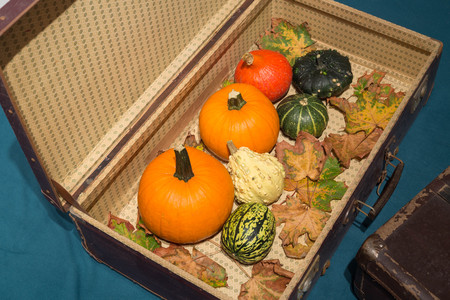 Pumpkins in the old suitcases  Autumn and Halloween concept Stock Photo