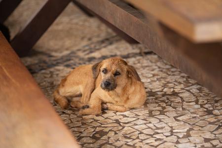 dog sitting on the floor Фото со стока