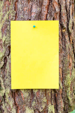 blank sheet of paper with a space for an inscription attached to a tree. Concept of caring for and protecting the environment