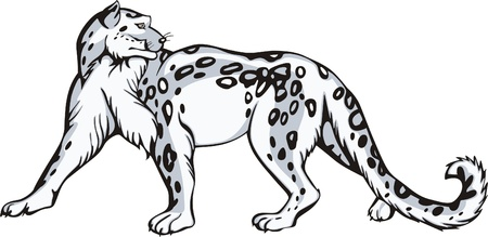 raptorial: Graceful snow leopard turned round his head. Vinyl-ready EPS Illustration. Illustration