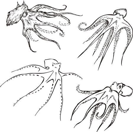 devilfish: Vector Set of octopuses Illustration