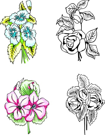Flowers. Set of color and black/white illustrations. Stock Vector - 13607657