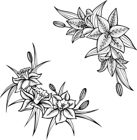 Lilies  Set of two black and white illustrations  Stock Vector - 13728628