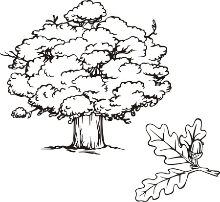 Oak árbol y rama con bellota. Ilustración en blanco y negro.