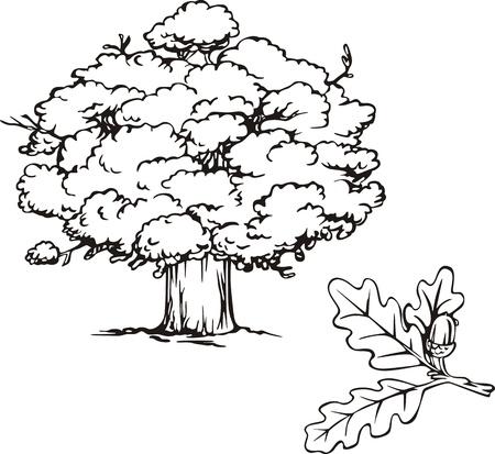 Rovere albero e ramo con ghianda. Illustrazione in bianco e nero.