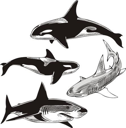 サメやクジラ。黒と白のイラストのセットです。  イラスト・ベクター素材