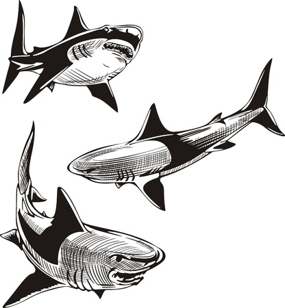 Three sharks. Set of black and white  illustrations. Vector