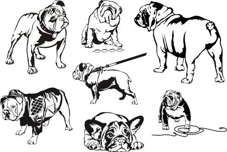 buldog: Bulldogs. Conjunto de ilustraciones del vector blanco y negro. Vectores