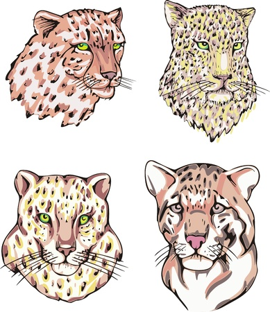 Heads of leopard and cheetah. Set of vector illustrations. Illustration