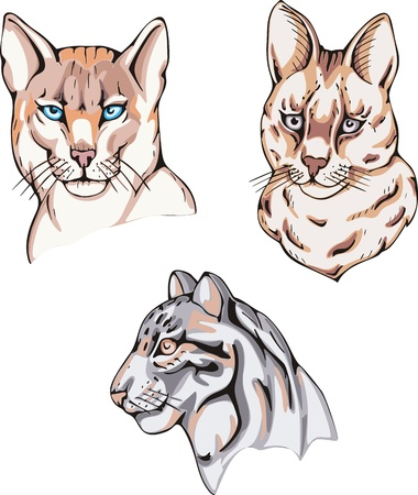 felidae: Totems - wild cats with solar signs. Set of vector illustrations.