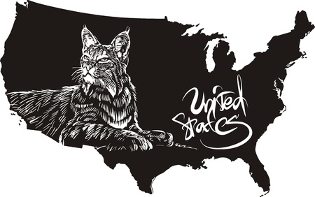 felidae: Bobcat and U.S. outline map. Black and white vector illustration. Lynx rufus.