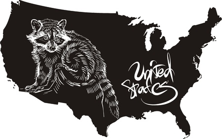 Raccoon and U.S. outline map. Black and white vector illustration. Stock Vector - 16554574