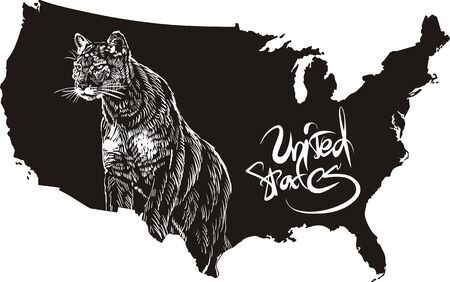 Cougar and U.S. outline map. Black and white vector illustration. Puma concolor. Vector