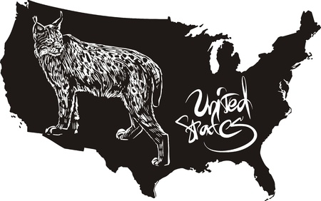 felidae: Lynx and U.S. outline map. Black and white vector illustration.