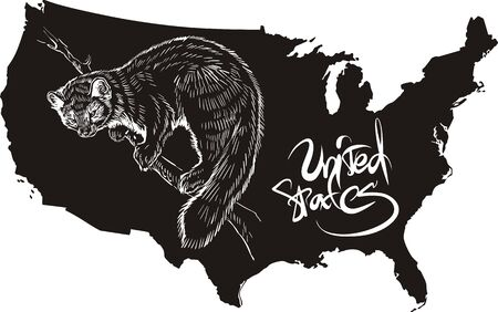 marten: Marten and U.S. outline map. Black and white vector illustration. Illustration