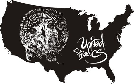 opossum: Opossum and U.S. outline map. Black and white vector illustration. Illustration