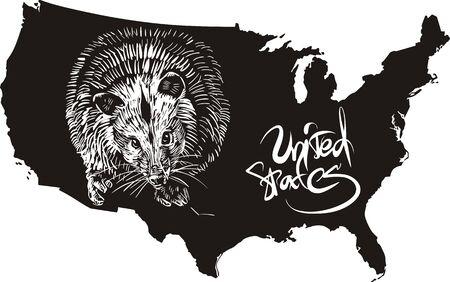 possum: Opossum and U.S. outline map. Black and white vector illustration. Illustration