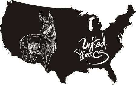 americana: Pronghorn and U.S. outline map. Black and white vector illustration. Antilocapra americana. Illustration