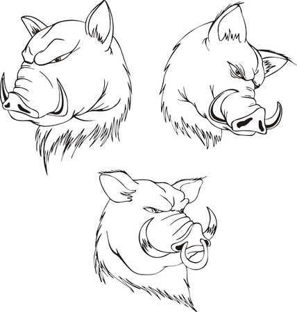 snarling: Aggressive boar heads. Set of black and white vector tattoo designs.