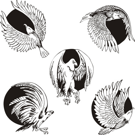 predatory: Round designs with eagles and falcons. Set of black and white vector illustrations.