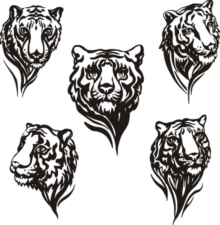 predatory: Set of tiger heads. Black and white vector illustrations. Illustration