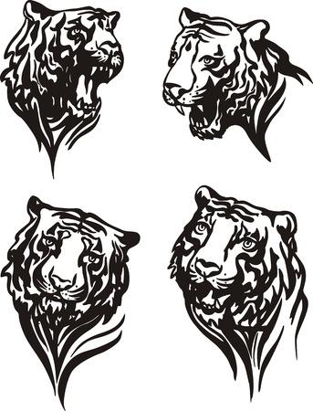 felidae: Set of tiger heads. Black and white vector illustrations. Illustration