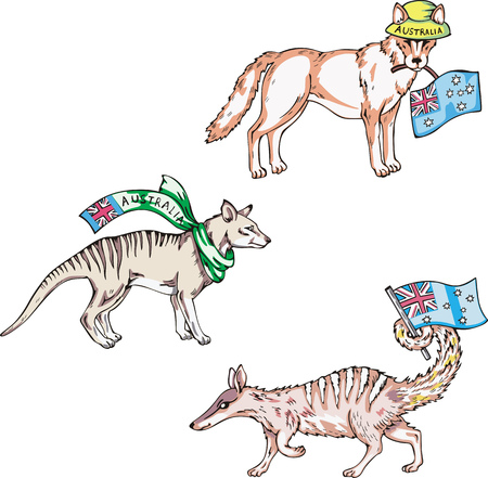 australian animal: Animales australianos - dingo, thylacine y numbat. Conjunto de ilustraciones vectoriales. Vectores