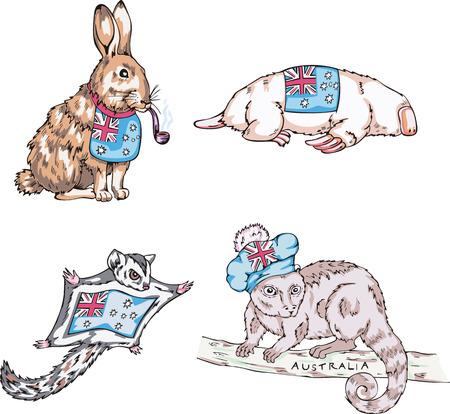 australian animal: Animales australianos - liebres, topos, etc Conjunto de ilustraciones vectoriales.