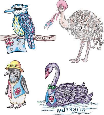 australian animal: Animales australianos - cisne negro, ping�ino, avestruz. Conjunto de ilustraciones vectoriales.