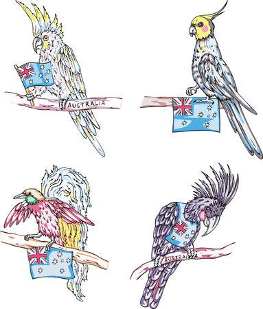 birds of paradise: Australian parrots and paradise birds. Set of vector illustrations. Illustration