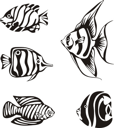 Black and white tropical fishes. Set of black and white vector illustrations. Vector