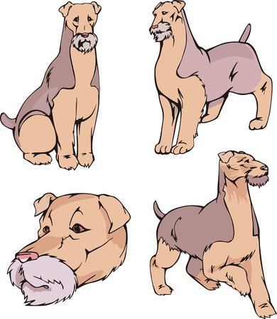 Set of cute dogs - Airedale Terrier breed. Vector illustrations.