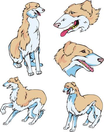 borzoi: Set of cute dogs - Borzoi breed. Vector illustrations.
