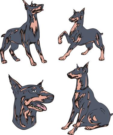 pinscher: Set of cute dogs - Doberman Pinscher breed. Vector illustrations.