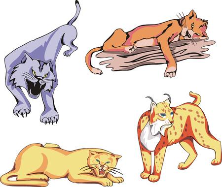 predator: Set of wild predator cats. Vector illustrations.