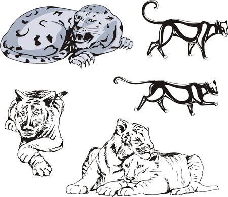 felidae: Set of wild predator cats. Vector illustrations.