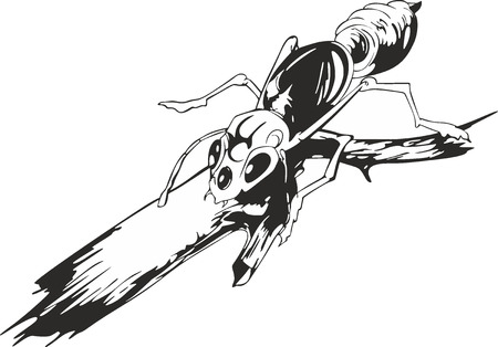 Black and white sketch of an ant on twig. Life of insects.