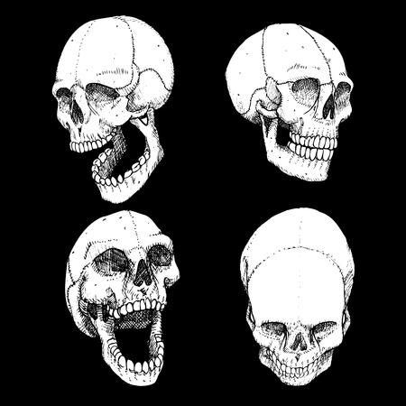 devil's bones: laughing skulls  Illustration