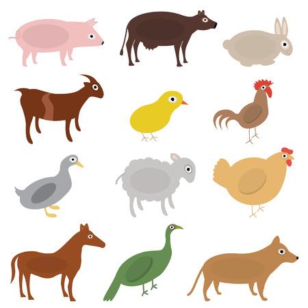 horse cock: cartoon animals
