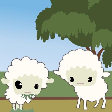 farmyard: cute sheep