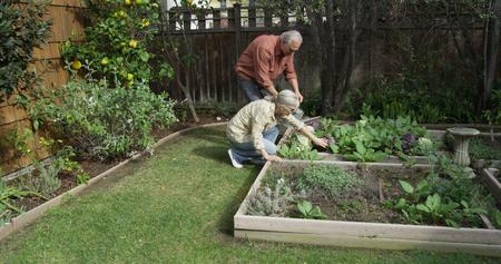 Seniors gardening together