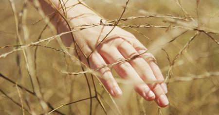 Closeup of young white woman's hand brushing bush wheat